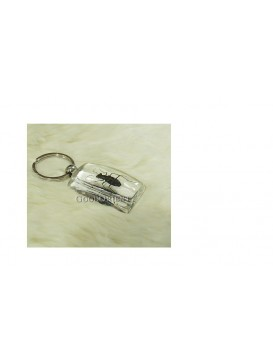 Centurial Insect Series Key Chain---Mylabris phalerata Pallas