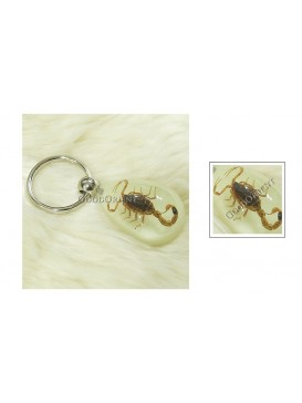 Centurial Insect Series Key Chain---Scorpion