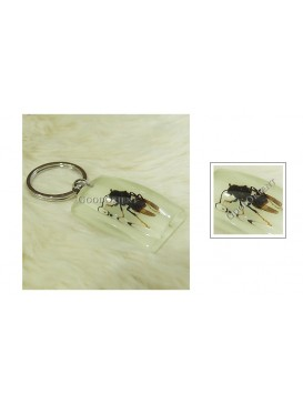 Centurial Insect Series Key Chain---Wasp