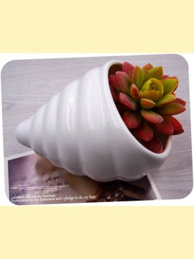 Delicate Pottery Conch Style Decoration